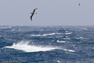 Southern Ocean by chrisbray.net