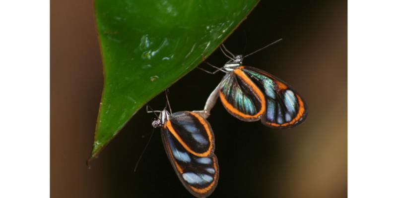 Life under a leaf (Amazon, 2007)